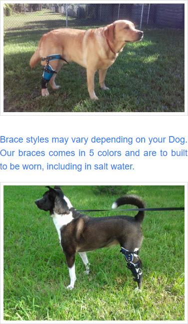 posh knee brace