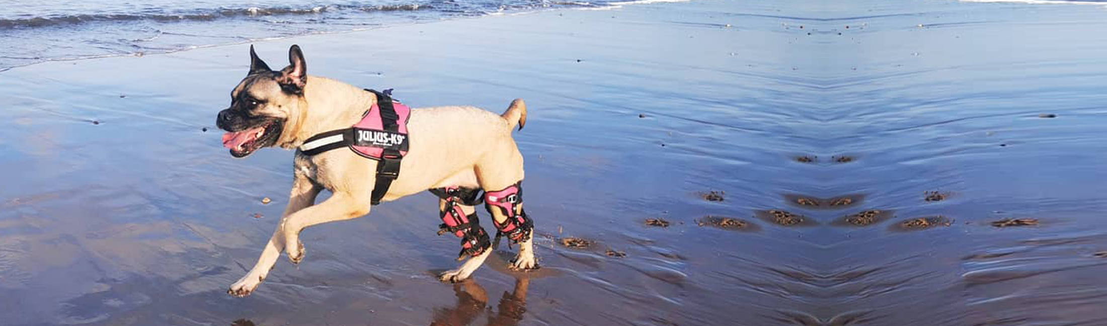 Posh Dog Knee Brace